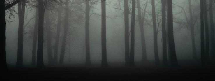SW - 2013 Forecast - Midnight Mystery Header